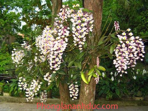 nhung-cach-trong-phong-lan-pho-bien-3